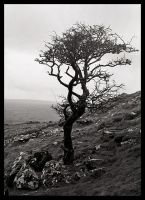Solitude on the Cox Tor by ganjohan