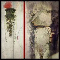 iPhoneography,   Cicada by Gerald-Bostock
