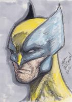 More sketch cards! Wolverine by MikeVanOrden