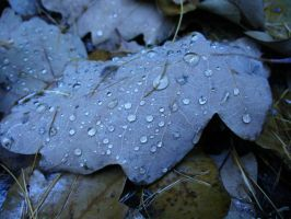 Leaf and drops of water by stepanka1