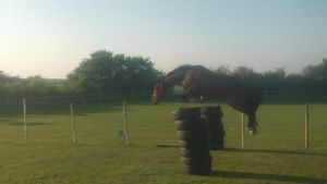 15.2hh Irish Trotter Freeschooling Over 5ft (1m55) by StarCrossedPsycho