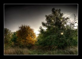 autumnalcolors I - pano by matze-end