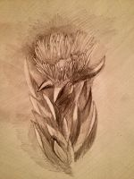 Some flower... Pencil by VLStone
