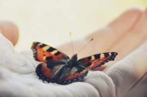 fly little butterfly by Holunder