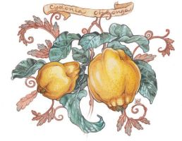 Golden Quince by golden-quince