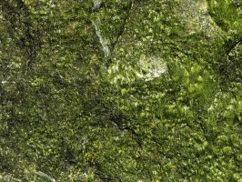 Moss Covered Rock Texture 2 by FairieGoodMother