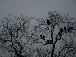 Silhouette of Birds by justinpooh