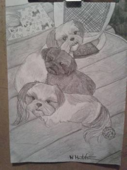 Drawing of my mums three dogs by wayne177
