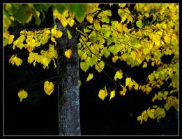 Autumn 1 by kanes