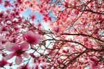 At Last...SPRING by VFrance