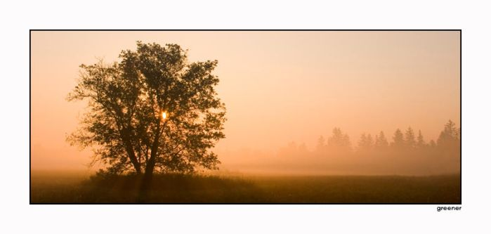 Early Morning by GreenerPhotography