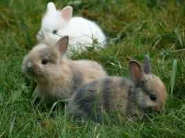 Babyrabbits. by Happinessisfree