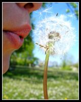When You Wish Upon A Dandelion by Nassie9874