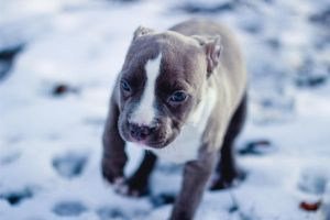 winter pup by weruninhalflight