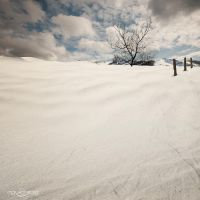 .: Dead Winter Reigns :. by oguzceng