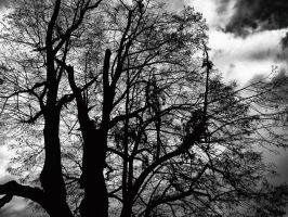 Naked Trees. by Activvv