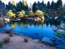 Duck Pond by JANorlin