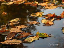 Float With Autumn by crypticshadows