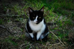 Staring cat by SilvieTepes