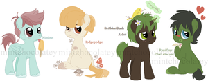 Little Colts MLP Adopt by MintChocolatey