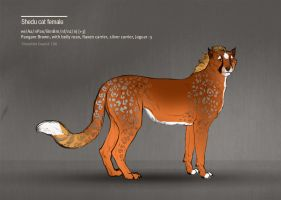 Shedu cat female 166 by Templado