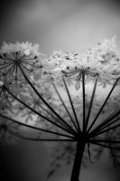 ..: Umbrella - BW :.. by Mademoiselle-P