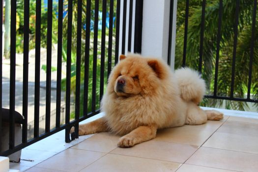 Mucho Chow Chow by Friedchiquin