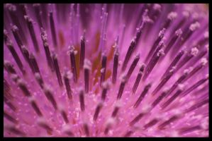 Thistle Forest by RobertRobledo