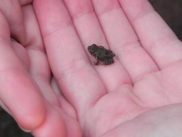 Tiny Frog by andishXD