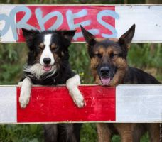 Road Sign Fun  (2 Of 4) by corniger-aries