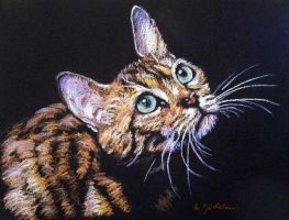 Multicolor cat by Coquelicotnoir