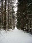 Stock Image - Wintry Forest - 04 by Life-For-Sale