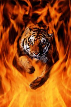 Flaming Tiger by 1Feral