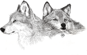 Wolf couple - texture study by unistar2000
