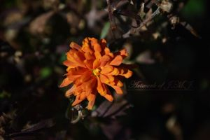 Unexpected Orange Flower by siannajmj
