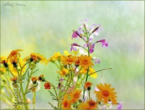 Simple wild flowers 3 by ShlomitMessica