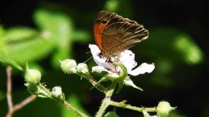 butterfly photo three Ashdown Forest. by frogslave69