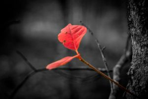 Fall Alone Isolated by HartBiit
