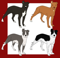 American Pit Bull Terrier Imports:OPEN: by tinyk