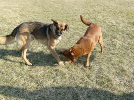 Dog Fight Stock 01 by Unseelie-Stock