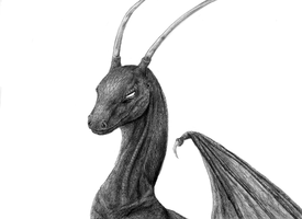 Wyvern by Flowerlark