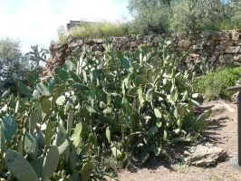 cactuses stock by Mihraystock
