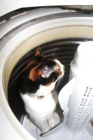 Skye Hiding in the Washing Machine by courtneytartan