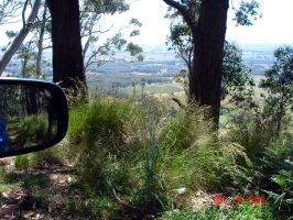 Healesville from the Car by Ven3215