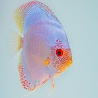 discus 2 by BL00DYSunflowers