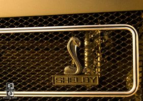Shelby Snake by Swanee3