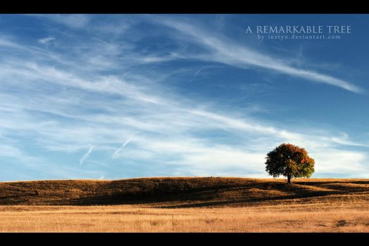 a remarkable tree by iustyn