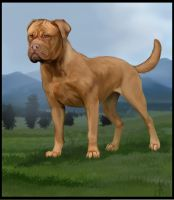 Mastiff of the French by SolinaBright