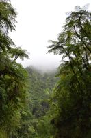 Fern trees and fog in subtropical forest by A1Z2E3R