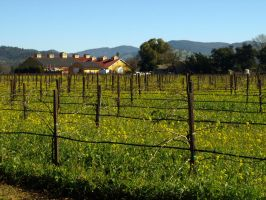 Napa Valley05 by abelamario